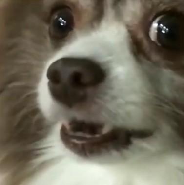 lonebluejay avatar