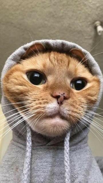 TinchoCareri avatar